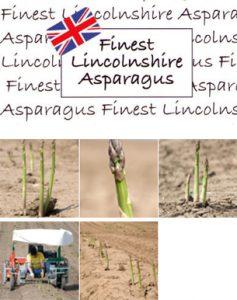 asparaguspic
